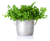 Parsley Bouquet — Stock Photo