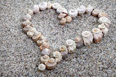 Sea shells Heart — Stock Photo