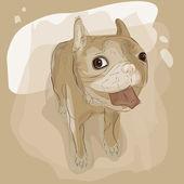 French bulldog — Stock Vector