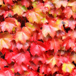 Autumn leaves — Stock Photo #12653153