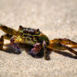 Crab photo — Stock Photo