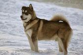 собака фото — Стоковое фото