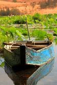 Lotus lake — Stock Photo
