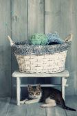 Kätzchen — Stockfoto