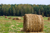 A roll of straw on a field. — Stock Photo
