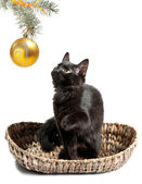 Black cat playing with Christmas toys — Stock Photo