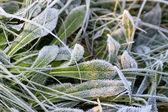 Zelené trávě s ledové krystaly — Stock fotografie