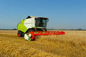 A combine harvester in a golden wheat field — Stock Photo