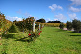Vineyards Estate Winery Soljans. Auckland. New Zealand. — Stock Photo