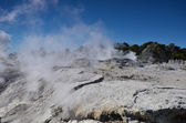Whakarewarewa Valley of Geysers. New Zelandiiya.Geotermalny Rese — Photo