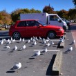 Car in the parking lot. Quay Rotorua. New Zealand. — Stock Photo