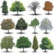 Different vector trees — Stock Vector