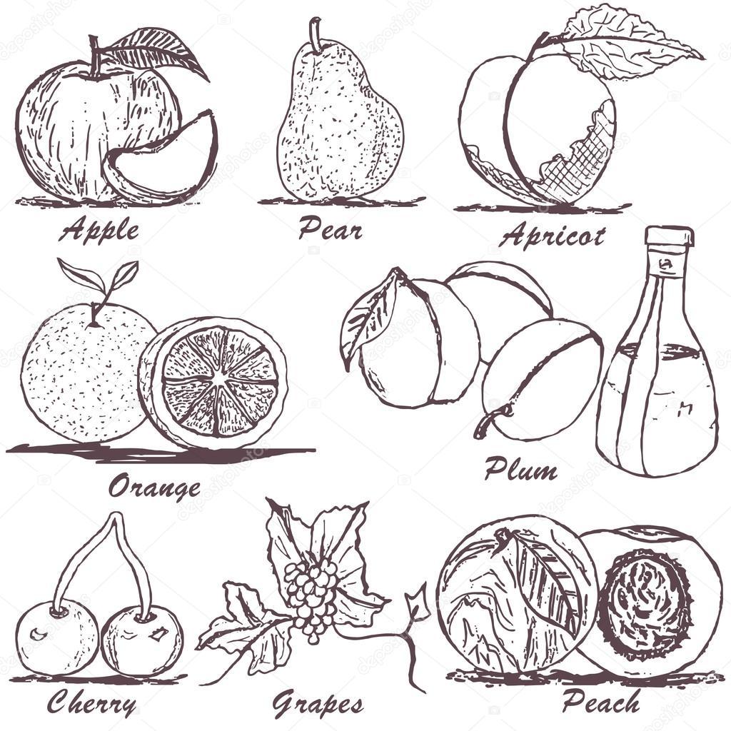水果素描 1 — 图库矢量图像08