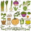 Hand drawn vegetable set 5 — Stock Vector