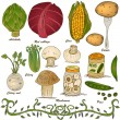 Hand drawn vegetable set 4 — Stock Vector