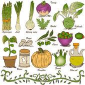 Hand drawn vegetable set 5 — Stock Vector