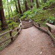 Stock Photo: Trail in Muir Woods