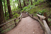 Trail in Muir Woods — Stock Photo