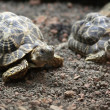Stock Photo: Turtles