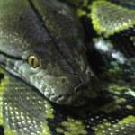 Snakes — Stock Photo #29412683