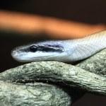 Snakes — Stock Photo #29413669