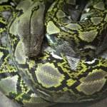 Snakes — Stock Photo #29414149