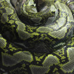 Snakes — Stock Photo #29414165