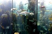 Underwater Aquaium — Stock Photo