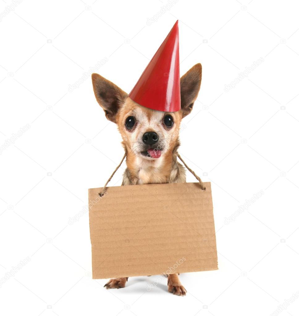 Поздравления с днем рождения с чихуахуа