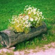 Wooden flower bed — Stock Photo