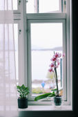 Flowers on the windowsill — Stock Photo