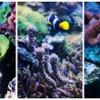 Royalty-Free Stock Photo: Underwater landscape collage