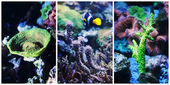 Underwater landscape collage — Stock Photo