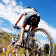 Mountain bike trail — Stock Photo #28393157