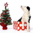 Christmas gift puppy — Stock Photo