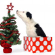 Christmas gift puppy — Foto de Stock