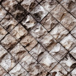 Stock Photo: Veertcal rock wall