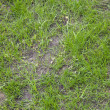 Newly seeded grass lawn — Stock Photo