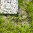 Stock Photo: Newly seeded grass lawn