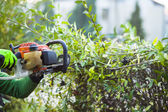 Cutting hedge with powertools — Stock Photo