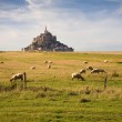 Le Mont-Saint-Michel and sheeps — Stock Photo