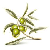 Green olives branch — Stok Vektör