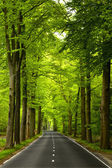 Beautiful road — Foto Stock