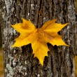 Close-up of a beautiful autumn leaf on a trunk of a tree - Foto Stock