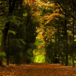 Stock Photo: Beautiful forest
