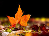 Güzel bir sonbahar yaprak yere yakın çekim — Stok fotoğraf