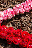 Vzor růže — Stock fotografie