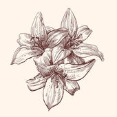 Illustration lily — Vetorial Stock