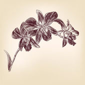 Floral orchid hand drawn vector — Cтоковый вектор