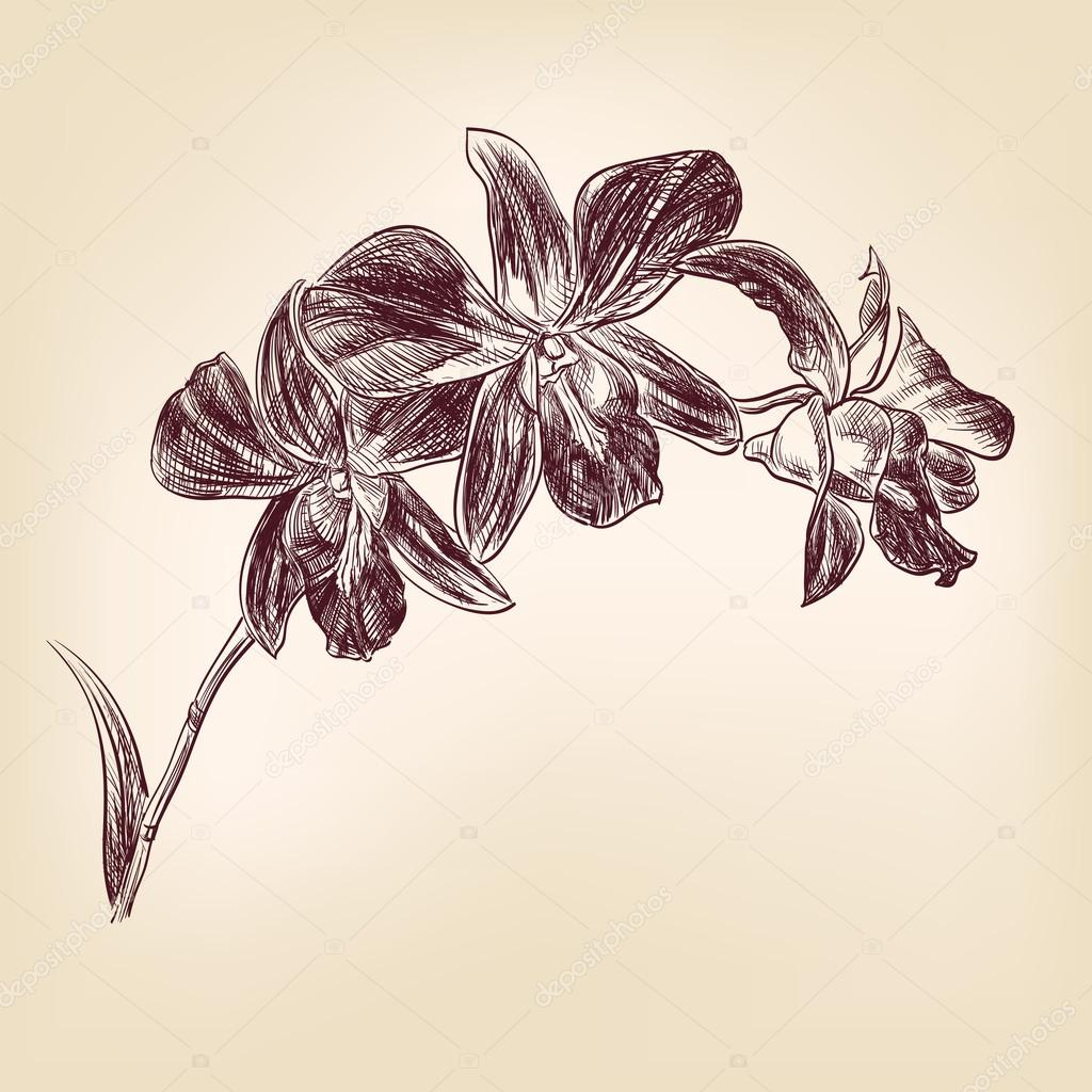 Floral orchid vintage hand drawn vector illustration  isolated — Stock Vector #13438681